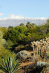 Desert Willow area in Palm Desert