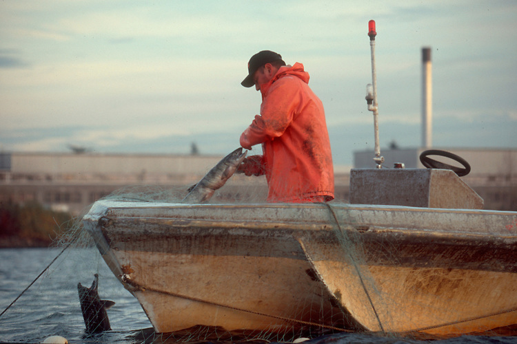 Native American salmon fisherman, gill netting, Duwamish river, Seattle, Puget Sound, Washington State, Suquamish Tribe,