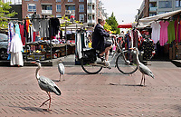 Nederland - Amsterdam - mei 2018 .  Reigers bij de Dappermarkt.  Foto: Berlinda van Dam / Hollandse Hoogte