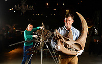 BNPS.co.uk (01202 558833)<br /> Pic: ZacharyCulpin/BNPS<br /> <br /> PICTURED: Rupert van der Werff with a Woolly Rhinoceros. The  Woolly Rhinoceros was roaming the earth 75,000 to 35,000 years ago.<br /> <br /> A collection of Jurassic Park-like fossilised amber containing 100 million year old insects has emerged for sale at auction.<br /> <br /> The 12 translucent lumps of the prehistoric resin date back to when dinosaurs walked the earth.<br /> <br /> At least five of the samples hold the perfectly preserved form of insects including a mosquito, a spider, a scorpion and a cockroach.<br /> <br /> In Steven Spielberg's classic 1993 film starring Richard Attenborough dinosaurs are reintroduced to the world by extracting their DNA from a mosquito preserved in amber.
