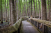 A boardwalk winds through the headwater swamp at Louisiana Purchase State Park near Brinkley Arkansas to a historic landmark.  This National Historic Landmark at the junction of Lee, Monroe and Phillips counties preserves the initial point from which all surveys of the property acquired through the Louisiana Purchase of 1803 initiated.