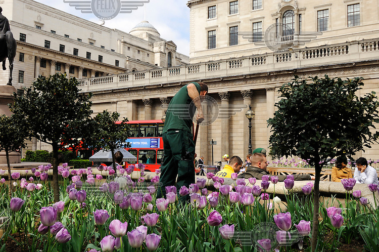 City gardener at work in a flowerbed outside the Bank of England, London.