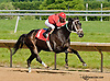 Myrasira winning at Delaware Park on 6/5/13