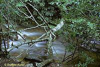 WF09-001b  Stream - Pisgah National Forest, NC