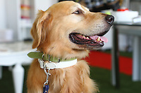 Legitimutt italian leather collars and leash