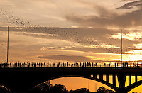 The Mexican free-tail bats under the  Congress Bridge are a multi-million dollar tourist attraction in Austin, Texas