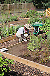 Volunteer working on the Plants for Bugs plots at RHS Garden Wisley.