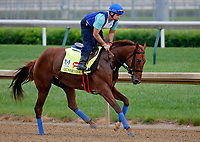 LOUISVILLE, KENTUCKY - APRIL 30: Gunnevera, owned by Peacock Stables, LLC and trained by Antonio Sano, exercises in preparation for the Kentucky Derby at Churchill Downs on April 30, 2017 in Louisville, Kentucky. (Photo by Jon Durr/Eclipse Sportswire/Getty Images)