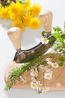 Essbare Wildkräuter, Kräuter werden mit Wiegemesser, Messer auf einem Brettchen zerkleinert, Ernte, Gänseblümchen (Bellis perennis), Löwenzahn (Taraxacum officinale), Schafgarbe (Achillea millefolium), Edible wild herbs, herbs are crushed with mezzaluna, knife on a small board, harvest, English Daisy, Common Yarrow, Blowballs, Dandelion