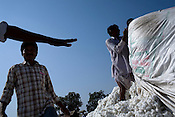 Daily wage labourers help the cotton farmers who brought the cotton produce to sell at a local market (Maharashtra State Co-operation Cotton Growers Marketing Federation) in Vidharbha region in Maharashtra. ..In a country where agriculture is the mainstay (it employs nearly 60% of the population), this recently released gov't statistic is rather alarming - 46 Indian farmers kill themselves every day. Maharashtra tops the list with maximum number of farmer suicides. Vidharba in north Maharashtra -- 'suicide country' as it has come to be known tops the farmer suicides due to  farmer distress: the loan sharks, crippling debt, failing crops year after year. Photographer: Sanjit DasDaily wage labourers are seen helping the cotton farmers with sorting out the raw cotton brought to the local market (Maharashtra State Co-operation Cotton Growers Marketing Federation) in Vidharbha region in Maharashtra. ..In a country where agriculture is the mainstay (it employs nearly 60% of the population), this recently released gov't statistic is rather alarming - 46 Indian farmers kill themselves every day. Maharashtra tops the list with maximum number of farmer suicides. Vidharba in north Maharashtra -- 'suicide country' as it has come to be known tops the farmer suicides due to  farmer distress: the loan sharks, crippling debt, failing crops year after year. Photographer: Sanjit Das
