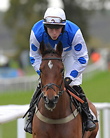 Bad Boy Du Pouldu ridden by Niall Houlihan and trained by Gary Moore during Horse Racing at Plumpton Racecourse on 4th November 2019