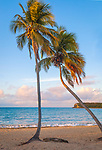 Vieques, Puerto Rico:A pair of palm trees at sunrise on the beach at Sun Bay