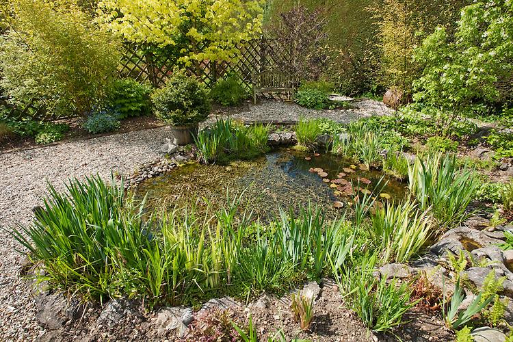 Mature landscaped garden pond in the spring sunshine, Uk