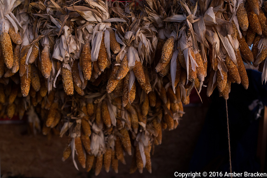 Corn hangs to dry in the DAPL resistance camps near Canon Ball, North Dakota on Thursday, November 10, 2016. Traditional foods are an important part of camp life and cultural reclamation.