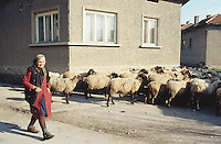 Bulgaria. Province Oblast Lovech. Lukowit. An old farmer woman is taking her sheep out in the early morning. © 1997 Didier Ruef