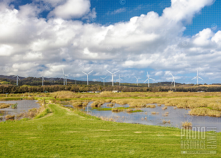 Windmill Farm near shrimp or prawn ponds in Kahuku, O'ahu