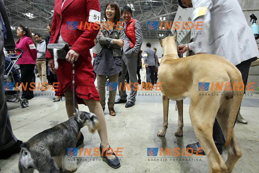 Salone internazionale del Cane.Tokyo 1/4/2012.Foto Insidefoto / Hitoshi Yamada / Panoramic.