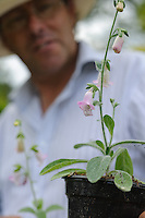 Terry Baker holding Digitalis Dubia