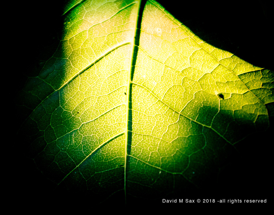 8.9.17 - Backlit....