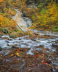 Ricketts Glen State Park, PA: Mohican Falls on Kitchen Creek in autumn