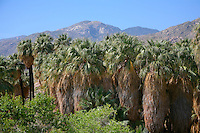 Andreas Canyon, Palm Springs, California