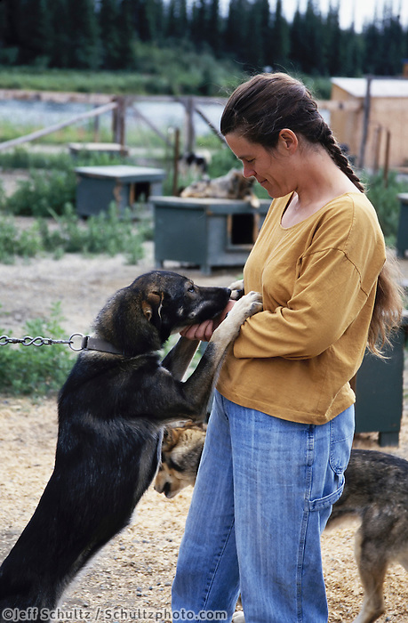 Susan Butcher & Sled Dogs At Home In Fairbanks In Alaska