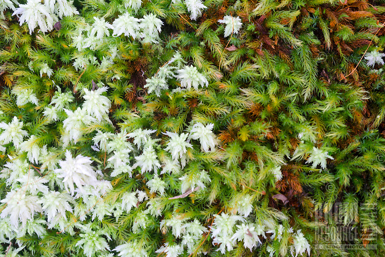 A close-up of green and white moss along a hiking trail in the Kohala Forest Reserve, Hawai'i Island.