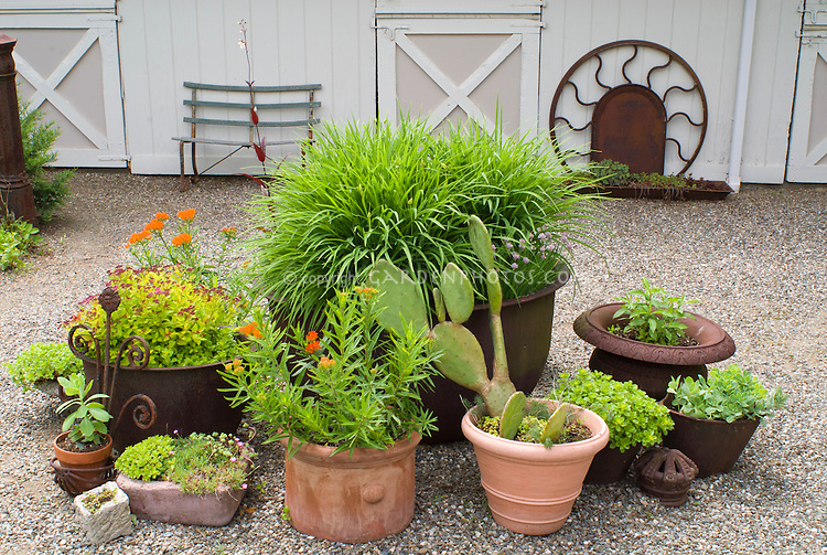Container garden of perennials, shrubs, cactus, daylilies Hemerocallis in bud, using a variety of mixed pots planters, terra cotta, rusted iron, on pebble stone couryard with garden ornaments