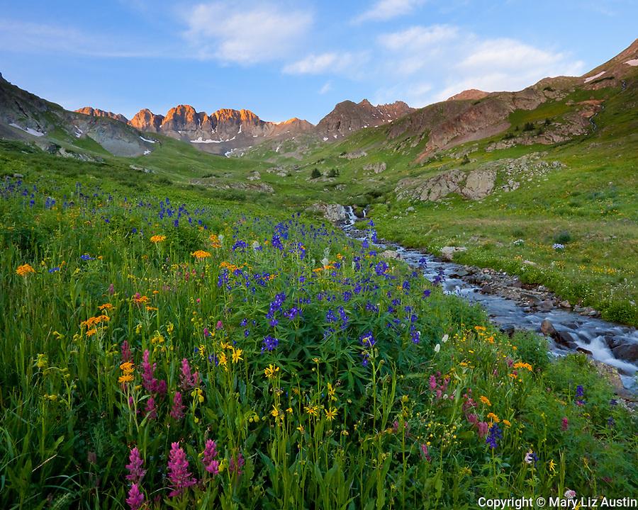 San Juan Mountains, CO<br /> American Basin with delphinium (Delphinium barbeyi), paintbrush (Castilleja rhexifolia), sneezeweed (Dugaldia hoopesii) and other wildflowers in an alpine meadow beneath Handies Peak at sunrise