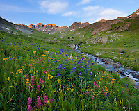 San Juan Mountains, CO<br /> American Basin with delphinium (Delphinium barbeyi), paintbrush (Castilleja rhexifolia), sneezeweed (Dugaldia hoopesii) and other wildflowers in an alpine meadow beneath Handies Peak at sunrise
