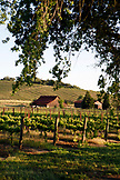 USA, California, Healdsburg, on the grounds of Rutherford Vineyard, a family-owned and managed wine company in Alexander Valley