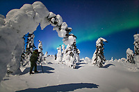 Photographers under moonlight, photographing the snow covered spruce trees and aurora borealis, Interior, Alaska.