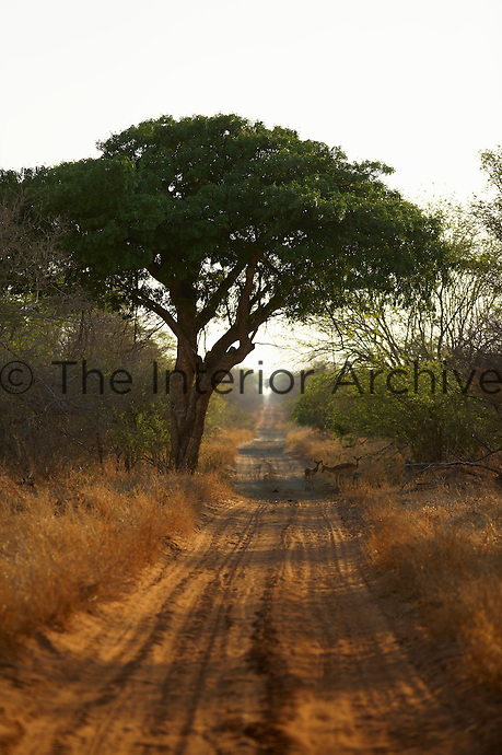A country track near Singita Pamushana Lodge, Malilongwe Trust, Zimbabwe.