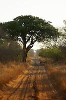 A country track near Singita Pamushana Lodge, Malilongwe Trust, Zimbabwe.