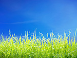 Fresh young green lawn grass under blue sunny sky closeup background