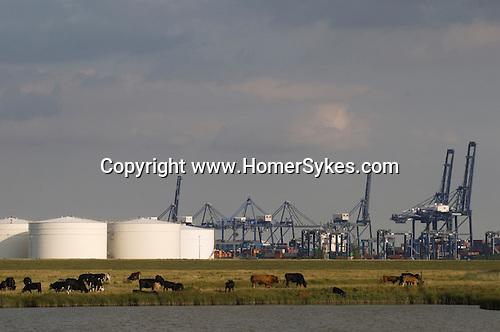 Isle of Grain Kent. UK. Oil refinery. Liquid Natural Gas tanks.