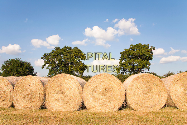 Bales of hay in a field, Wiltshire, England.CAP/MEL.©Mel Longhurst/Capital Pictures.
