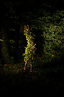 During the Covid19 Lockdown, a photoshoot of artist Jeremy Hutchison and his monsters in North Cadbury, Somerset, England