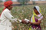 Asien Suedasien Indien Madhya Pradesh , bioRe Projekt fuer biodynamischen Anbau von Baumwolle in Kasrawad  -  mann und Frau bei Baumwollernte | .South asia India Madhya Pradesh , organic cotton project bioRe in Kasrawad - man and woman at cotton harvest