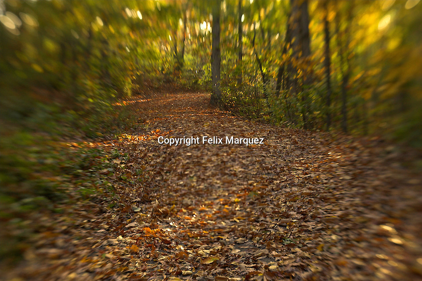 Sunlight peeking trough the fall foliage in Nothern Virginia's Stonewall Park...