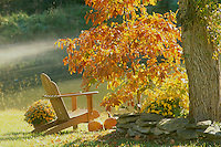Adirondack chair sits in the afternoon sunshine next to an orange sassafras tree