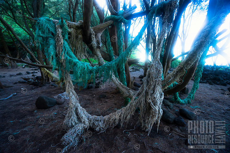 Old ropes that washed up along the beach at Pololu Valley were strung around a large tree, Hamakua, Big Island.