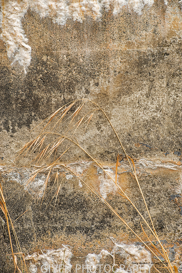 Dried grass & wall abstract
