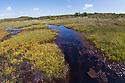 Stream running through bog, Godlingston Heath National Nature Reserve, Dorset, UK. August.