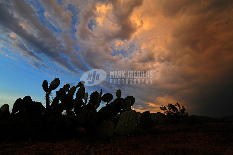 Desert cactus beavertail Arizona nature sky sunset nature dusk silhouette monsoon storm chaser chasing