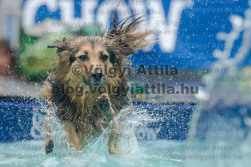 First ever dog diving competition held in Budapest, Hungary on May 18, 2014. ATTILA VOLGYI