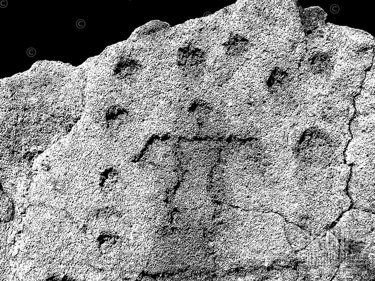Petroglyphs, images carved into hardened lava rock, at the Pu`u Loa site on Hawaii island.