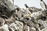 USA, Alaska, Homer, China Poot Bay, Kachemak Bay, wildlife on the boat ride to Kachemak Bay Wilderness Lodge