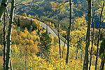 Autumn aspens line the route as Colorado State Highway 133 winds its way along McClure Pass, near Marble, Colorado.