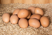 Huevos / Eggs. Photo: VizzorImage / Gabriel Aponte / Staff